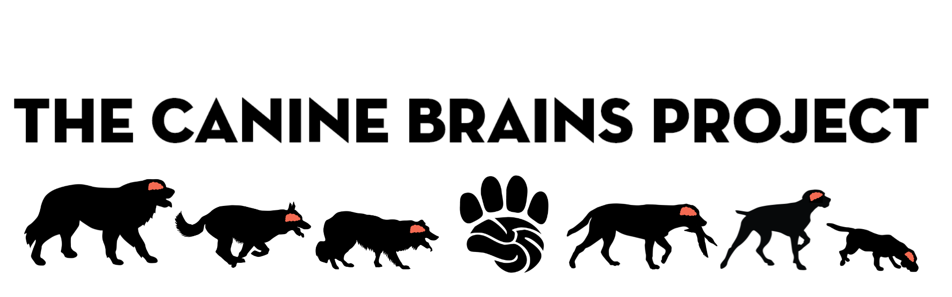 The Canine Brains Project