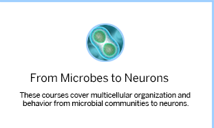 MCB Microbes
