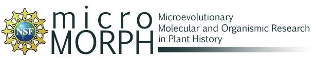 micromorph