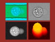 Optofluidic Cytometry Lab