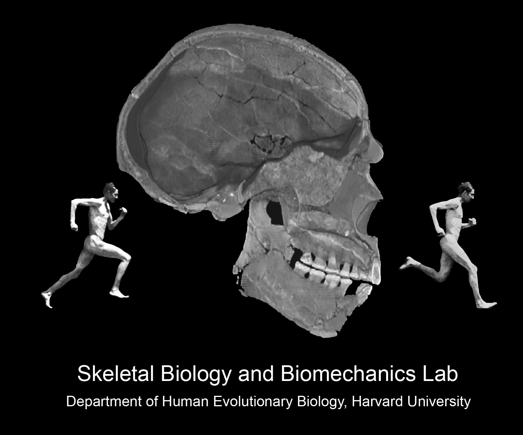 Harvard University Skeletal Biology and Biomechanics Lab
