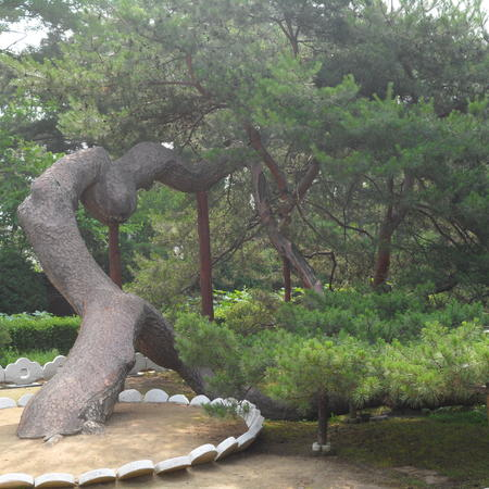 Infamous Hamhŭng pansong, pine tree at the courtyard of the Yi Sŏnggye's ancestral home
