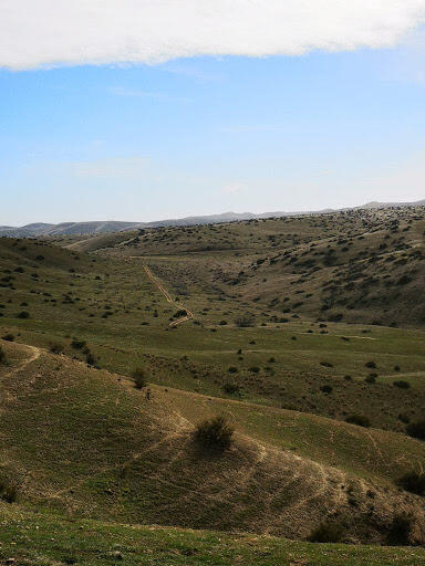 landscape photo of rolling hills without trees, green-brown grass, and small shrubs scattered