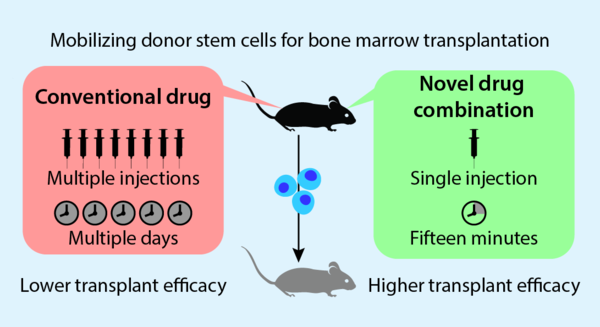 mobilizing donor stem cells