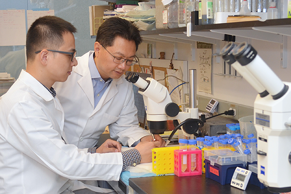 Dr. Chen in lab