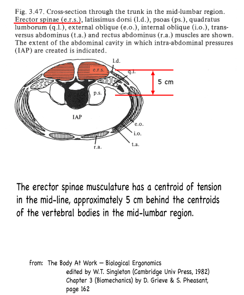 Erector Spinae Muscle Forces Harvard Natural Sciences Lecture