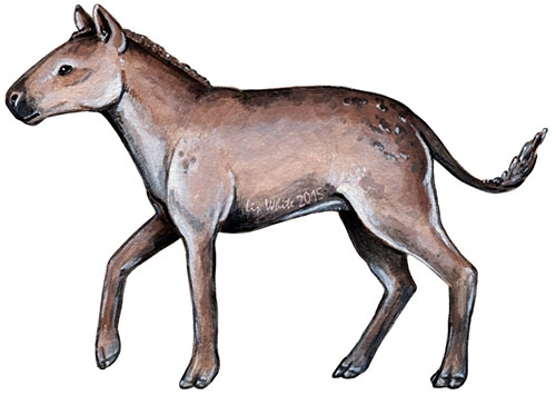 The small-bodied, three-toed fossil horse Miohippus (Artwork by Liz White; used with permission)