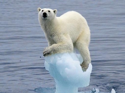 stranded_polar_bear
