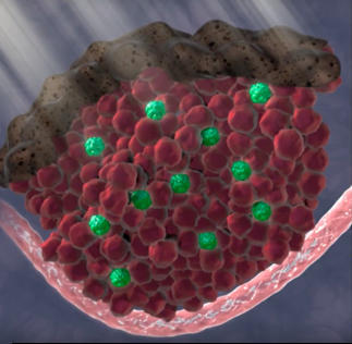 HHMI video still: UV light, melanocytes, and stem cells