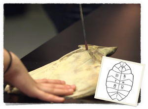 Oracle Bone image
