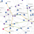 Cancer networks