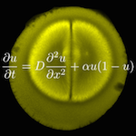 Depiction of mitosis with an equation overlaid