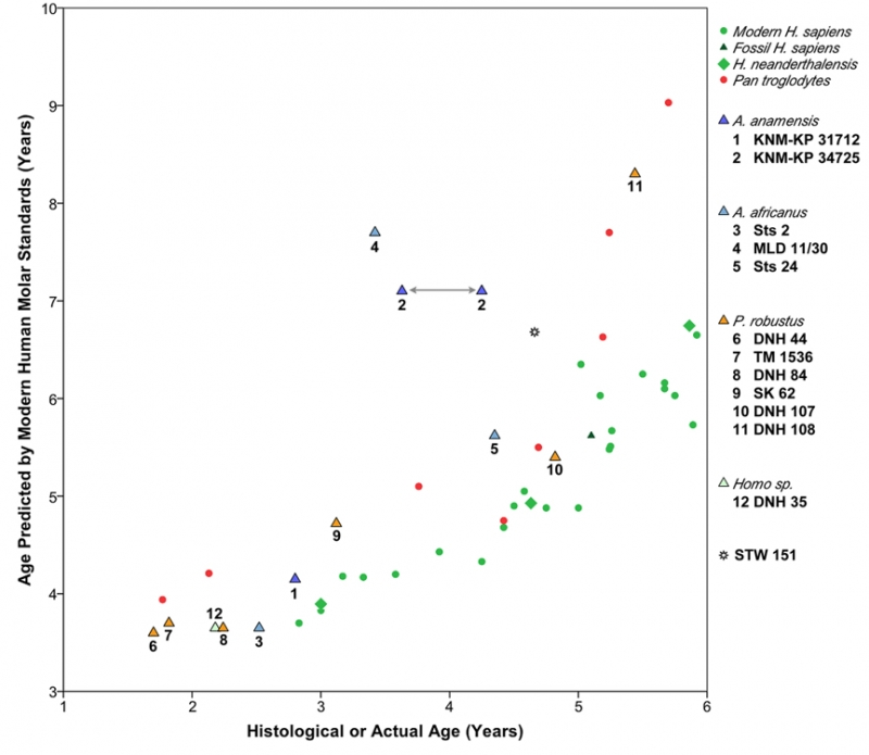Graph showing ages predicted in study to known ages