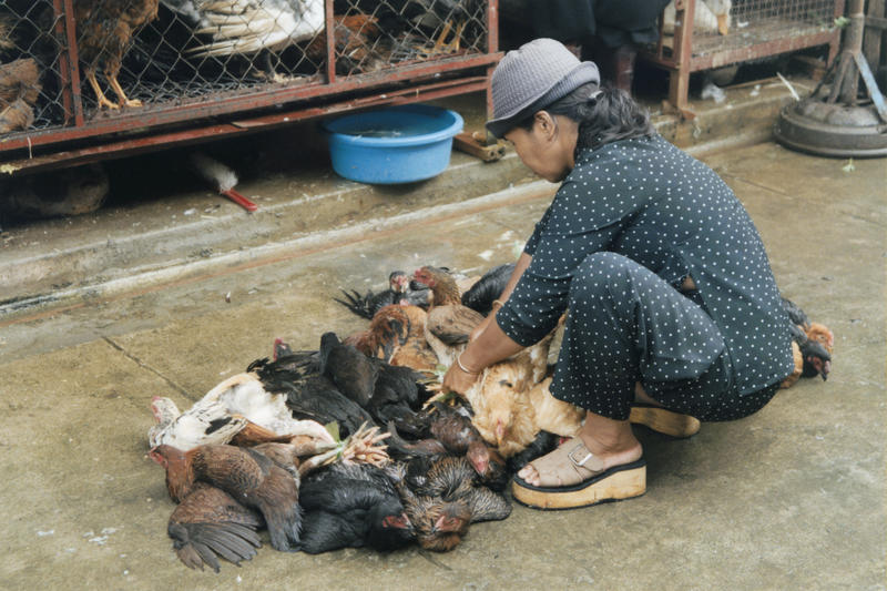 Chicken Market