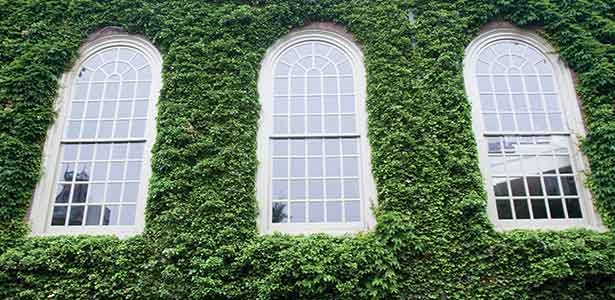 Ivy on the Memorial Church