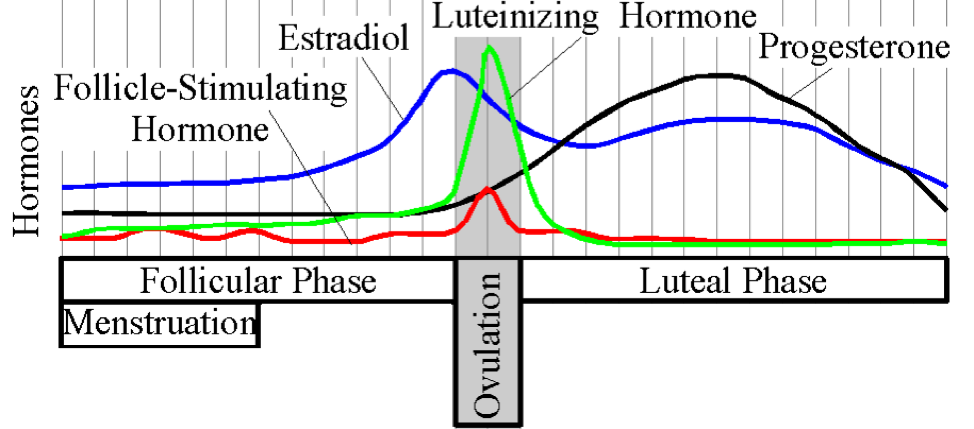 Illustration of how follicle-stimulating hormone, estradiol, luteinizing hormone, and progesterone vary throughout the menstrual cycle.