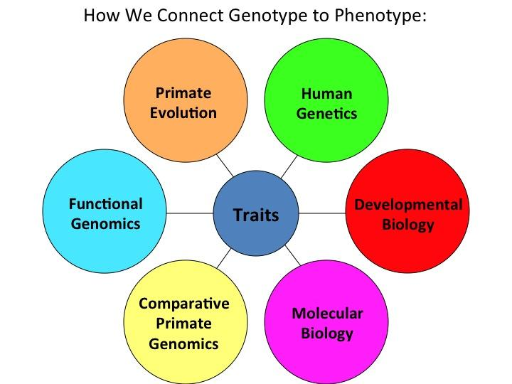 Why Pursue a BS in Genomics and Molecular Genetics at Florida Tech?