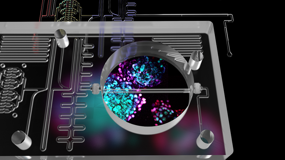 Computer-rendered image of a microfluidic chip superimposed over microscope image of beta cells.
