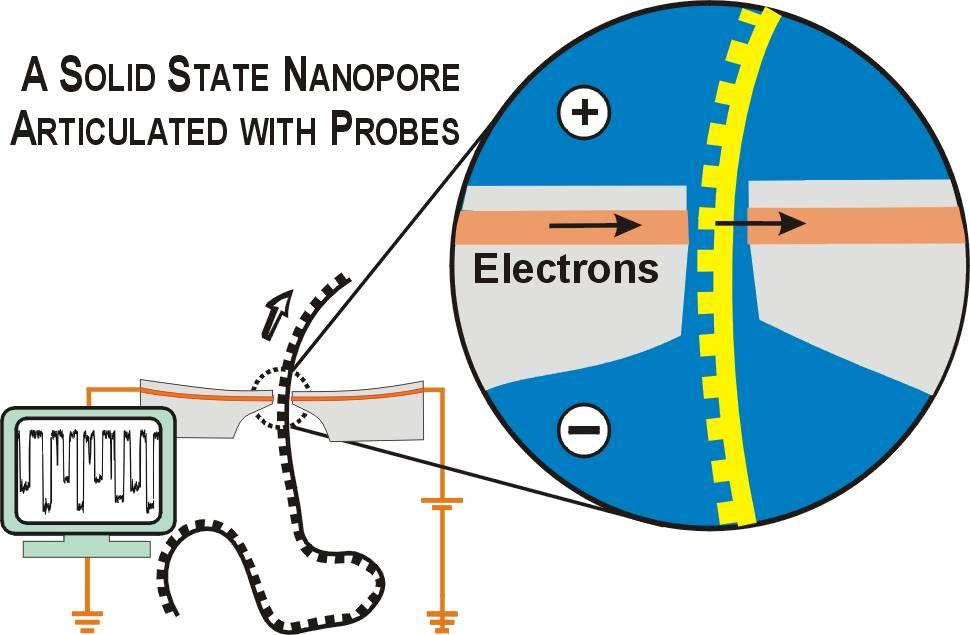 Nanopore Sequencing | Harvard Nanopore Group
