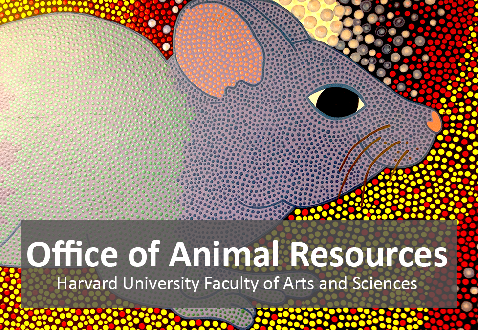 "colorful, modern painting of a mouse with the text ""Office of Animal Resources, Harvard University Faculty of Arts and Sciences"""