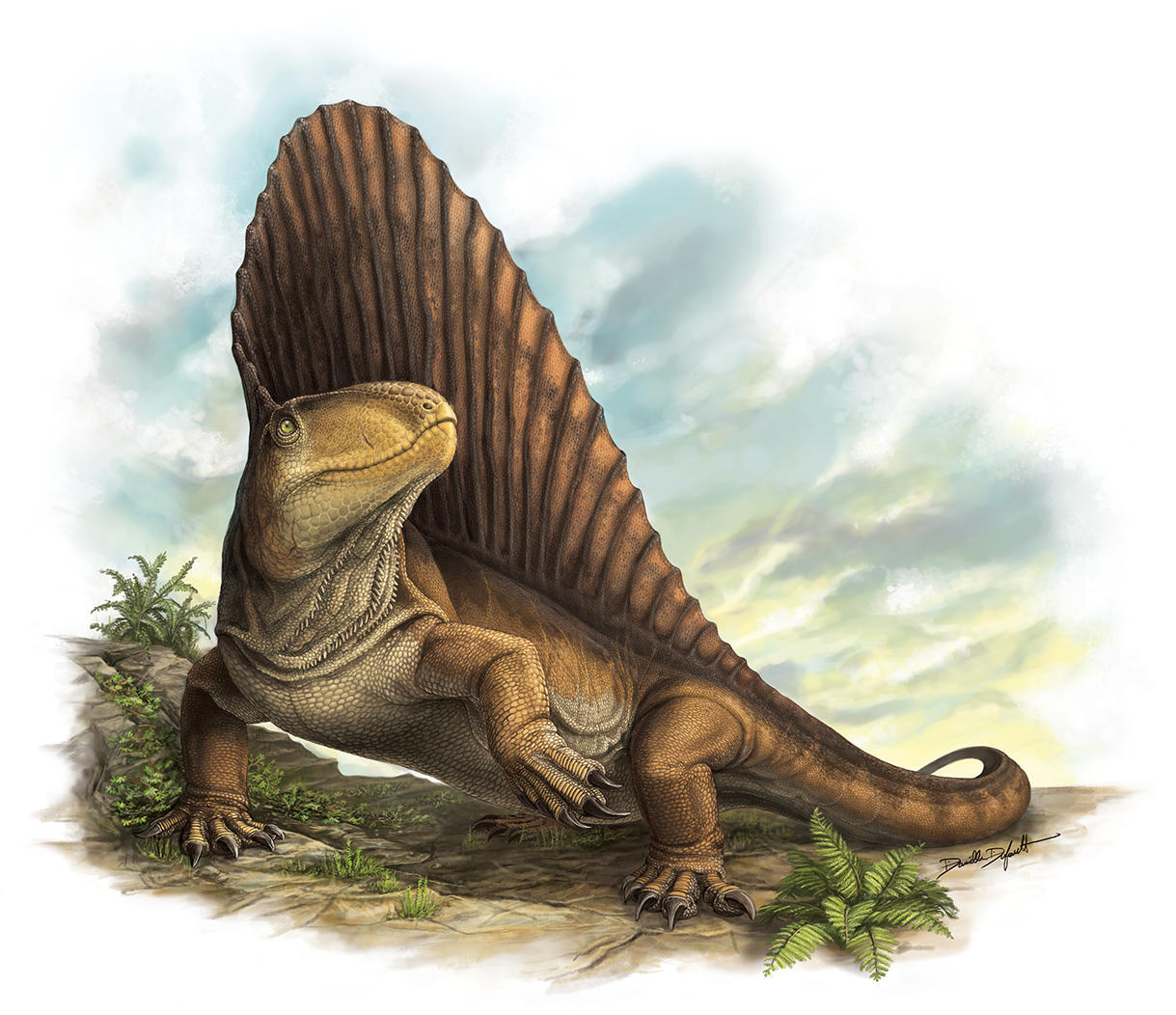 The sail-backed non-mammalian synapsid Dimetrodon