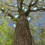 tweeting_tree