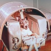 Image of the first dog in space