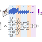 architecture of the quantum convolutional neural networks