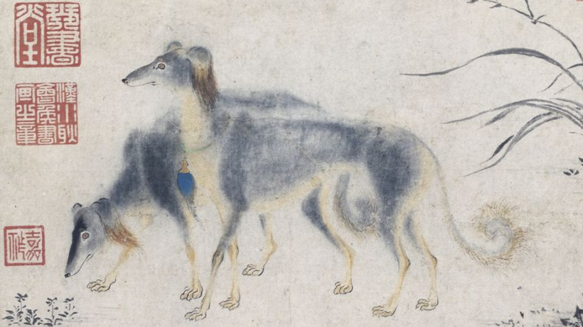 Two Saluki Hounds