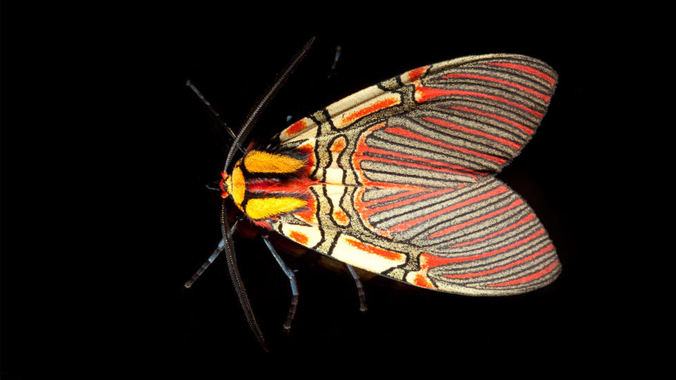 Science art of vibrantly colored moth