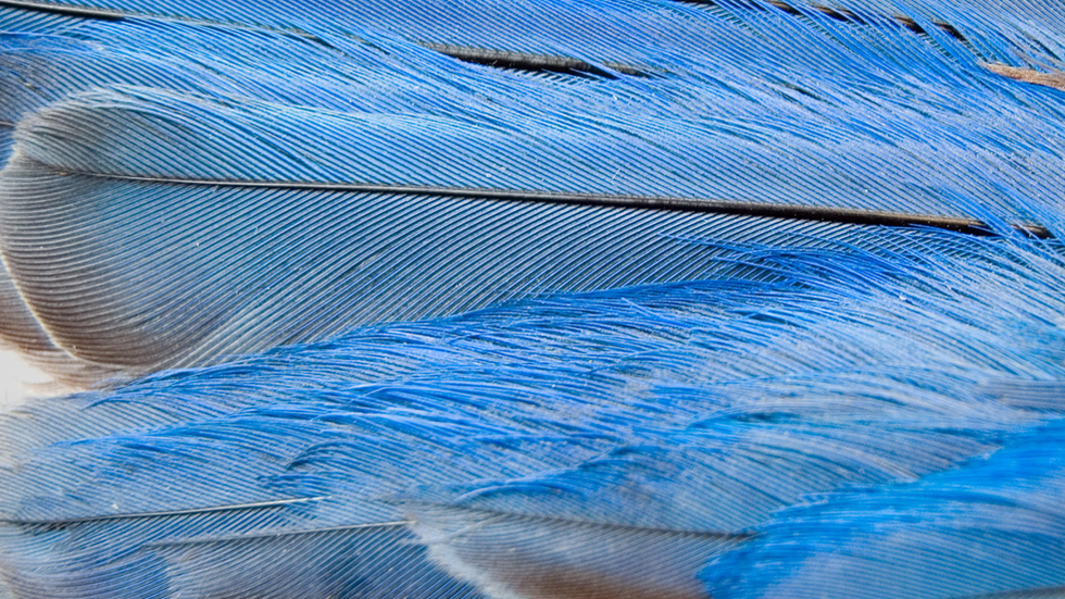 bright blue bird feathers