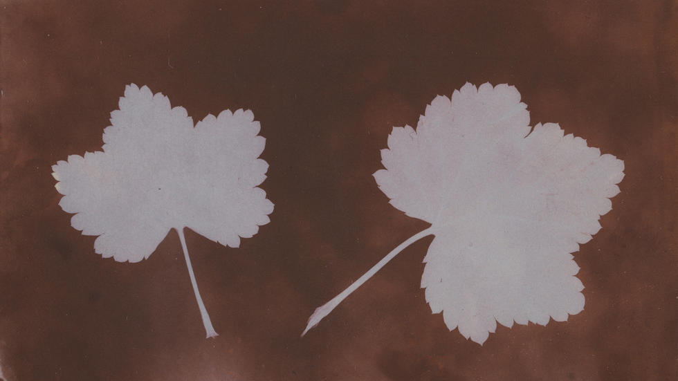 """Two Leaves"" by William Henry Fox Talbot, 1839"