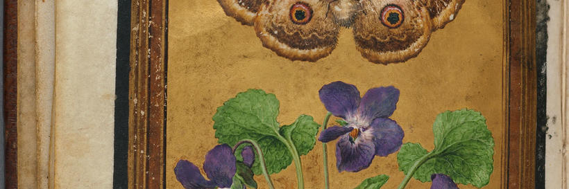 [Le Moyne de Morgues, Jacques, d. 1588. [Paintings of flowers, butterflies, and insects]. [between 1550-1570]