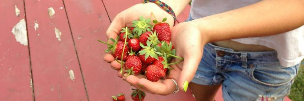 student holding strawberries in cupped hands