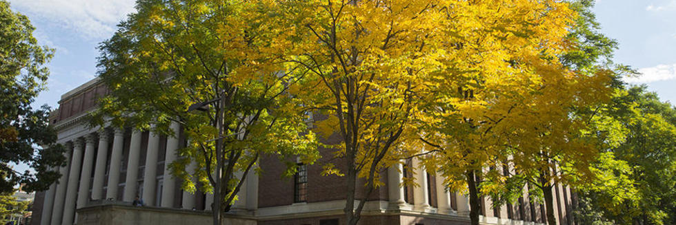 treees with fall foliage in front of Widener Library