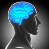 Harvard researchers intrigued by possible link between brain lesions, criminal behavior