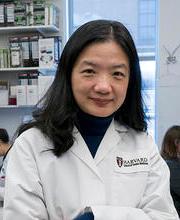 Yingzi Yang photo credit Harvard School of Dental Medicine
