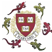 Harvard Lab for Developmental Studies