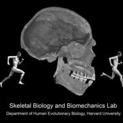 Skeletal Biology Lab Logo